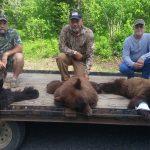 Bear-25