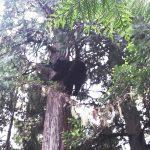 Bear-9